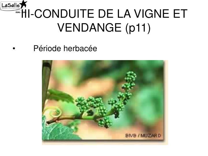 III-CONDUITE DE LA VIGNE ET VENDANGE (p11)
