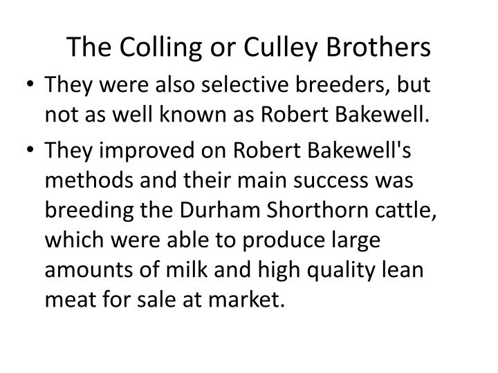 The Colling or Culley Brothers