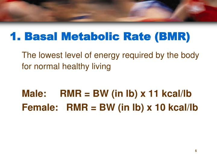 which rat had the fastest basal metabolic rate bmr Answer to which rat had the fastest basal metabolic rate (bmr) why did the metabolic rates differ between the normal rat and the.