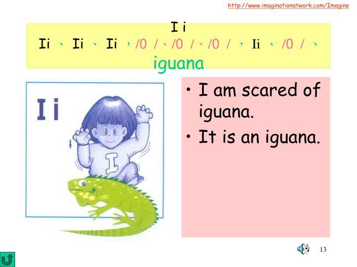 I am scared of iguana.