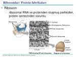 ribosom lar protein fabrikalar
