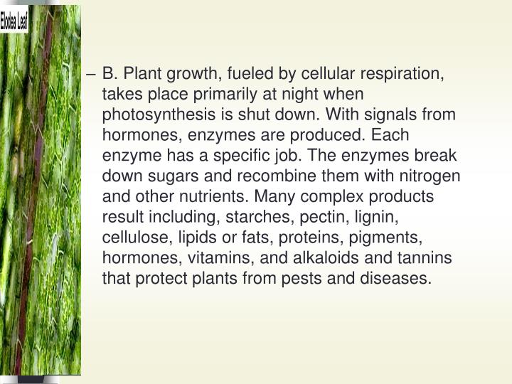 B. Plant growth, fueled by cellular respiration, takes place primarily at night when photosynthesis is shut down. With signals from hormones, enzymes are produced. Each enzyme has a specific job. The enzymes break down sugars and recombine them with nitrogen and other nutrients. Many complex products result including, starches, pectin, lignin, cellulose, lipids or fats, proteins, pigments, hormones, vitamins, and alkaloids and tannins that protect plants from pests and diseases.