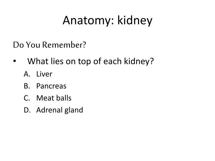 Anatomy: kidney