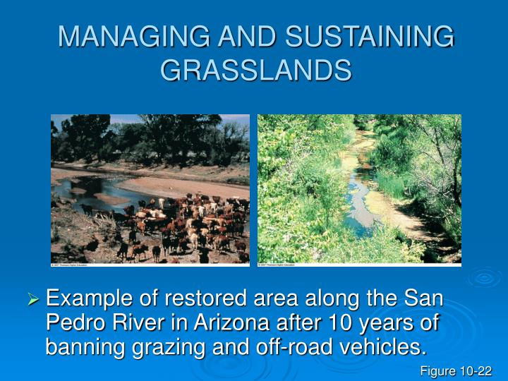 MANAGING AND SUSTAINING GRASSLANDS