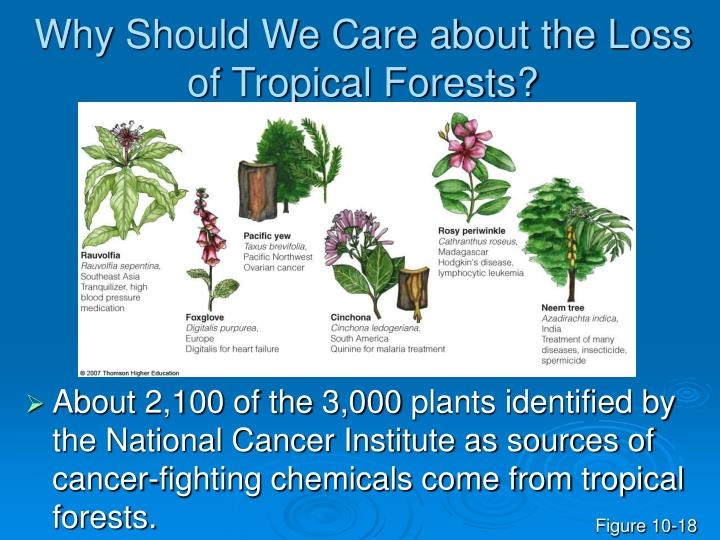 Why Should We Care about the Loss of Tropical Forests?
