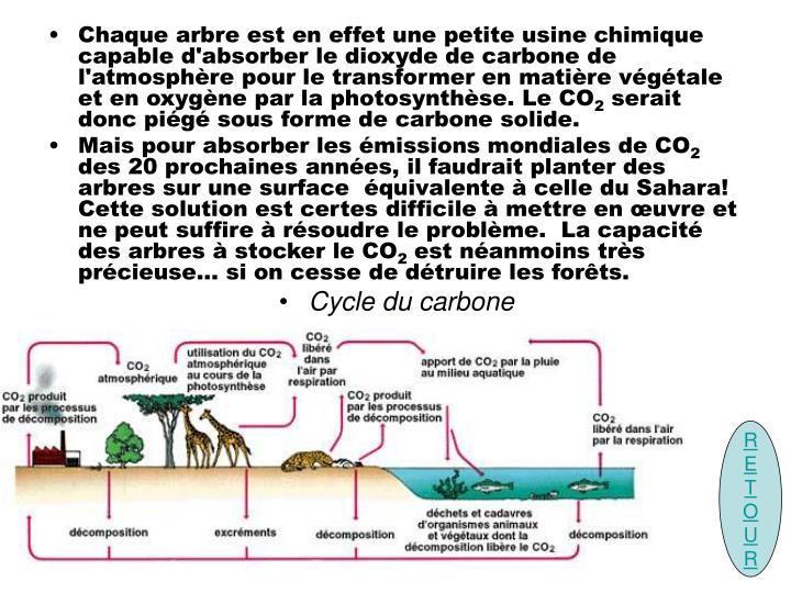 Chaque arbre est en effet une petite usine chimique capable d'absorber le dioxyde de carbone de l'atmosphère pour le transformer en matière végétale et en oxygène par la photosynthèse. Le CO