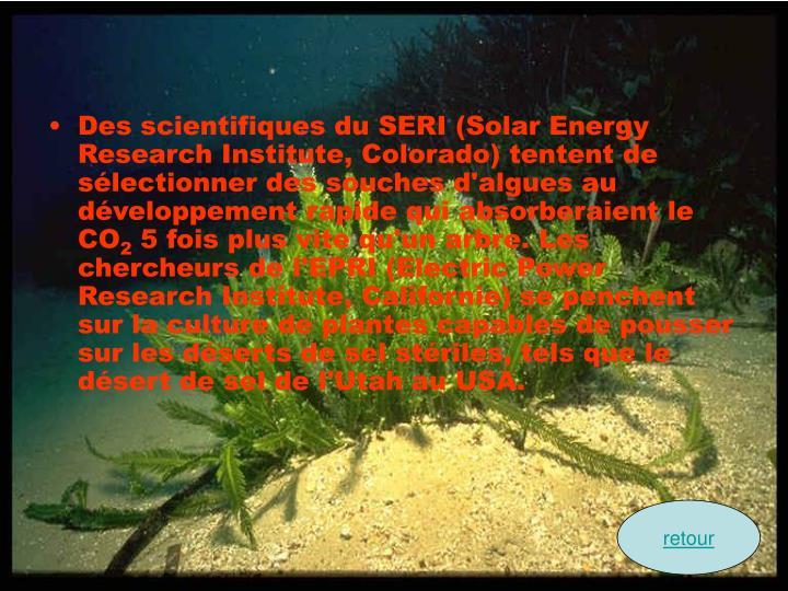 Des scientifiques du SERI (Solar Energy Research Institute, Colorado) tentent de sélectionner des souches d'algues au développement rapide qui absorberaient le CO