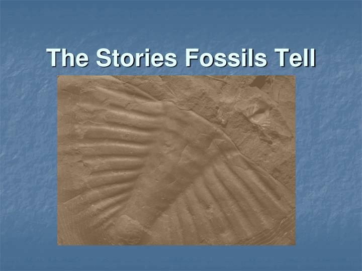 the stories fossils tell n.