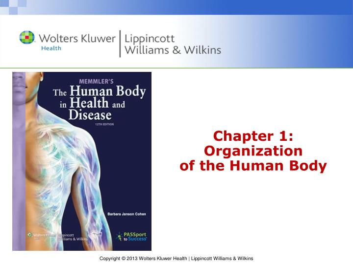 chapter 1 organization of the human body n.