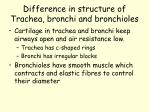 difference in structure of trachea bronchi and bronchioles