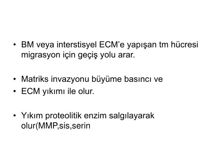BM veya interstisyel ECM'e yapışan tm hücresi migrasyon için geçiş yolu arar.