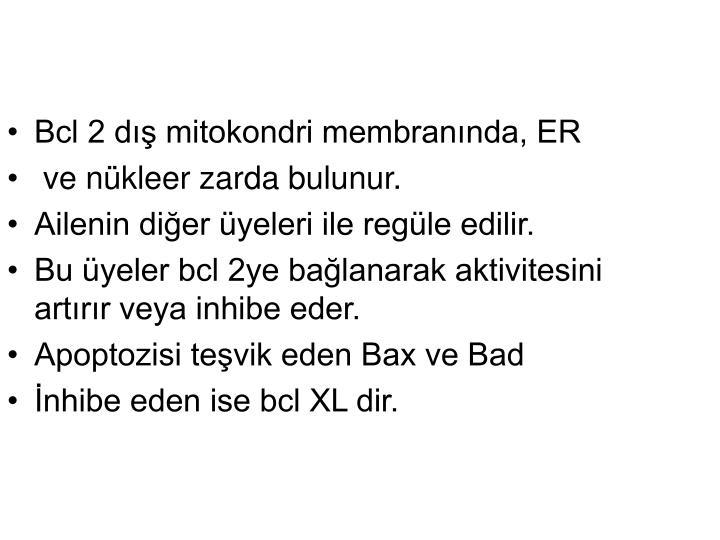 Bcl 2 dış mitokondri membranında, ER