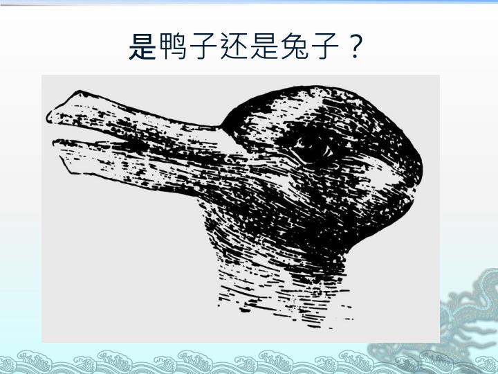 是鸭子还是兔子?