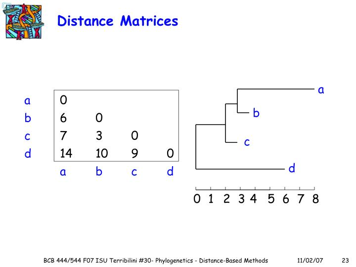 Distance Matrices