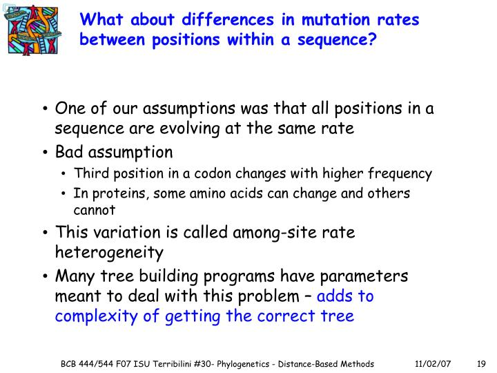 What about differences in mutation rates between positions within a sequence?