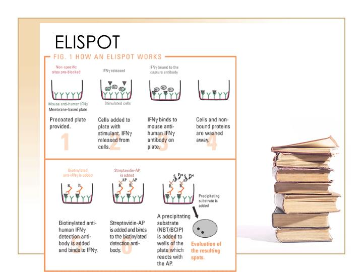 elispot assay ppt