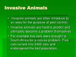 invasive animals