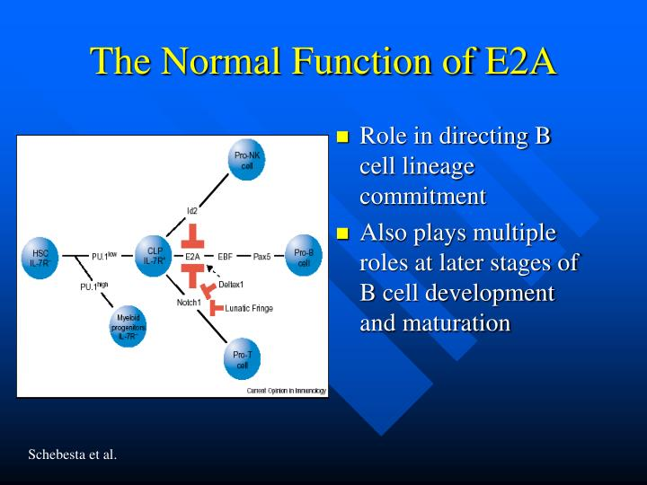 The Normal Function of E2A