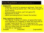 gene regulation what gets made when