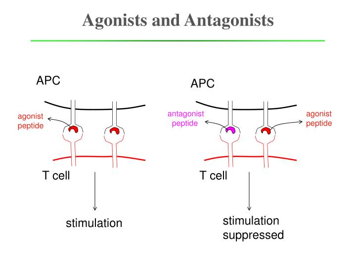 agonists and antagonists n.
