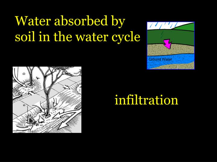 Water absorbed by