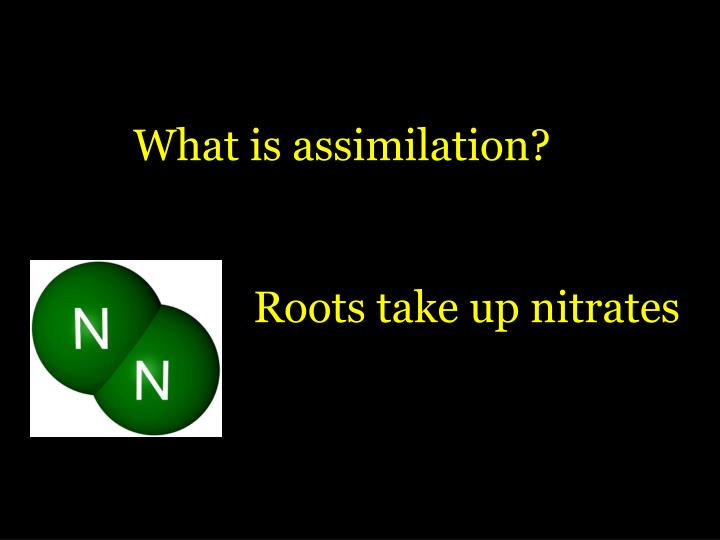 What is assimilation?