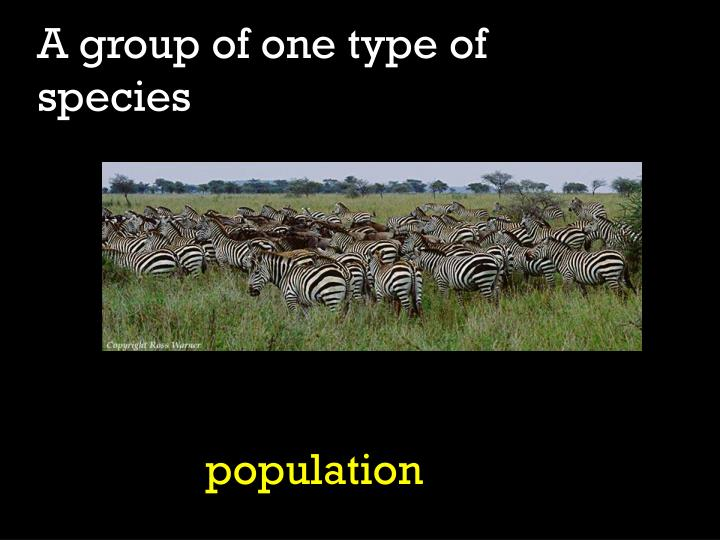 A group of one type of