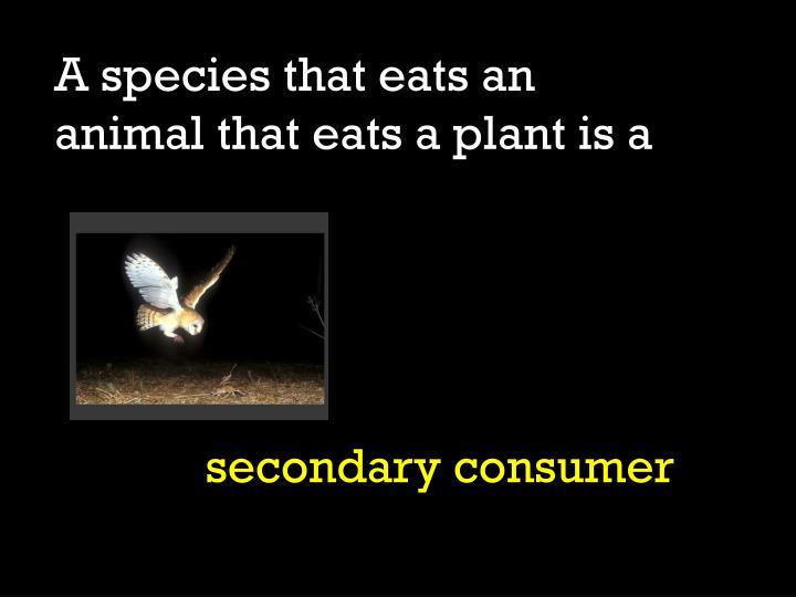 A species that eats an