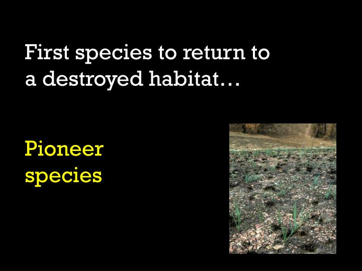 First species to return to