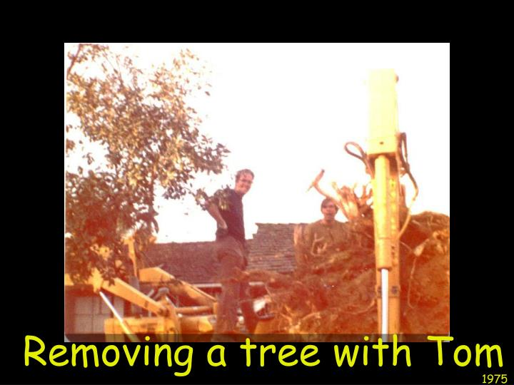 Removing a tree with Tom