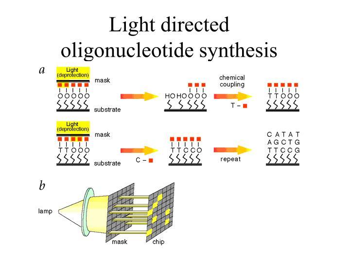 Light directed