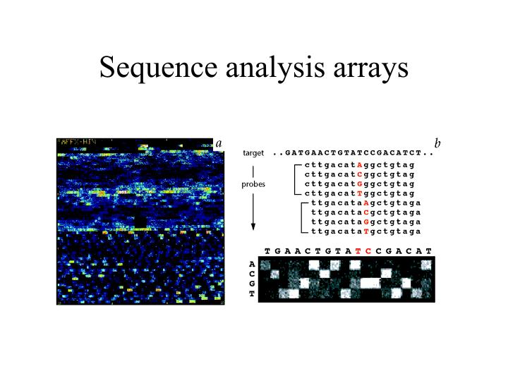 Sequence analysis arrays