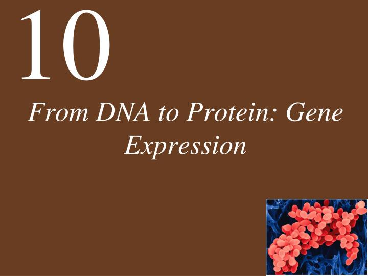from dna to protein gene expression n.