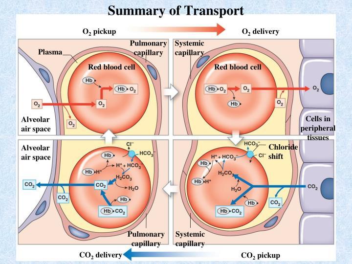 Summary of Transport
