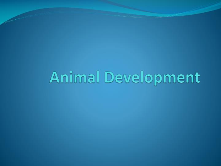 animal development n.