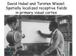 david hubel and torsten wiesel spatially localized receptive fields in primary visual cortex