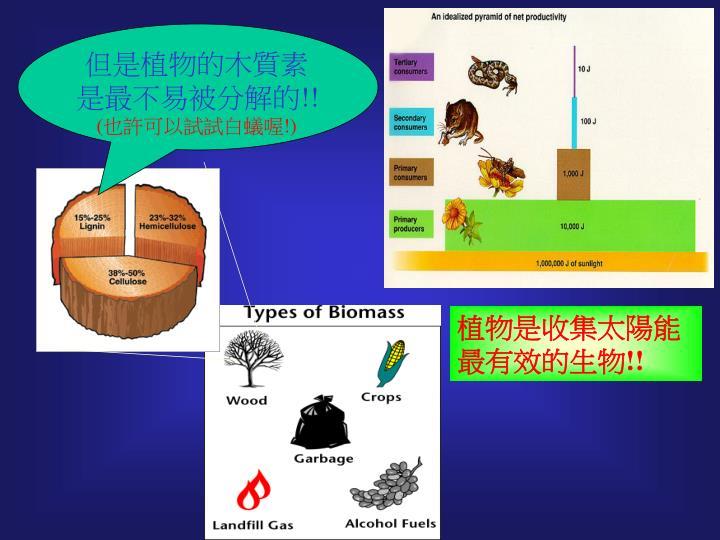 Ppt Biomass Of Green Chemistry Biomass Energy
