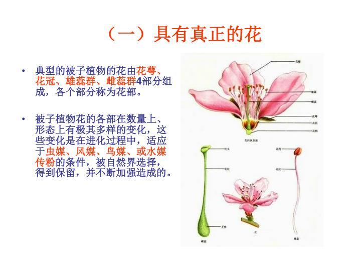 (一)具有真正的花