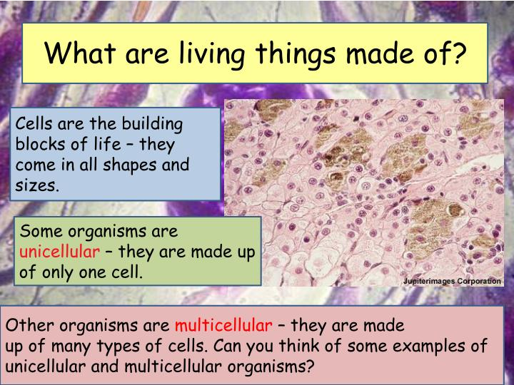 What are living things made of?