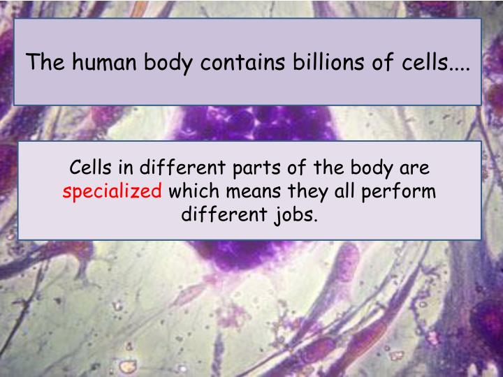 The human body contains billions of cells....