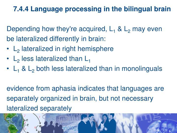 7.4.4 Language processing in the bilingual brain