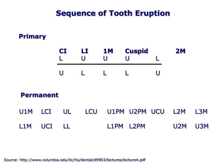 Sequence of Tooth Eruption