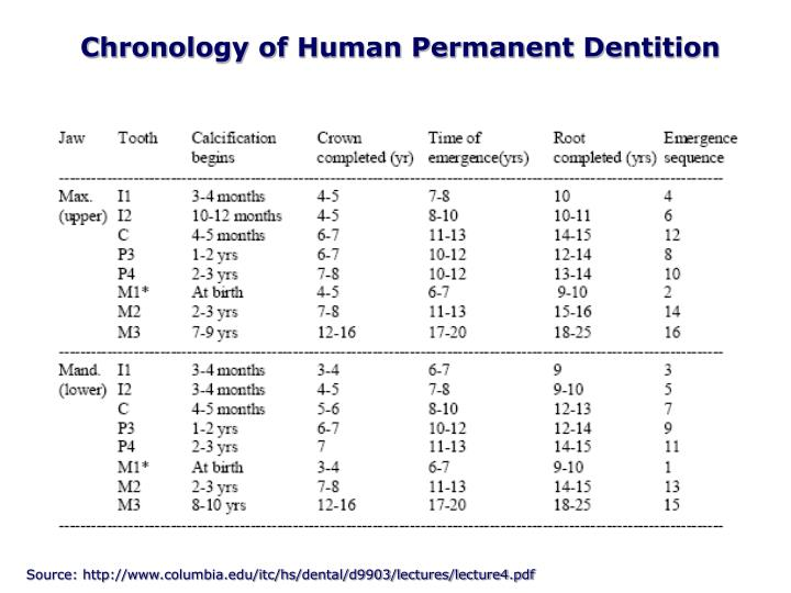 Chronology of Human Permanent Dentition