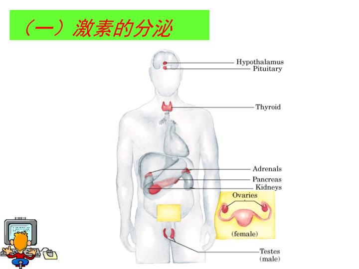 (一)激素的分泌