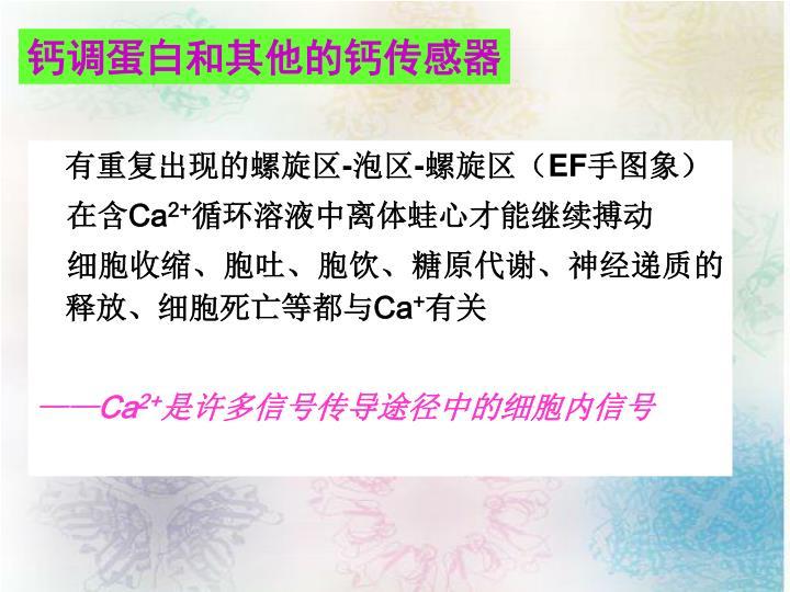 钙调蛋白和其他的钙传感器
