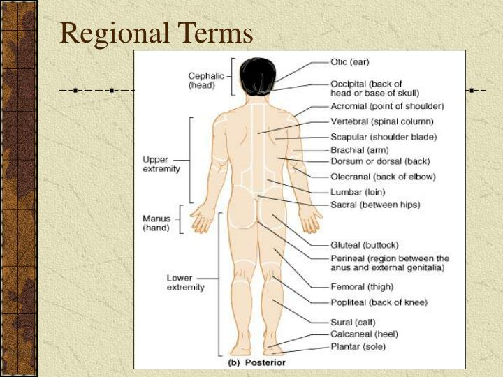 Ppt Introduction To The Human Body Powerpoint Presentation Id