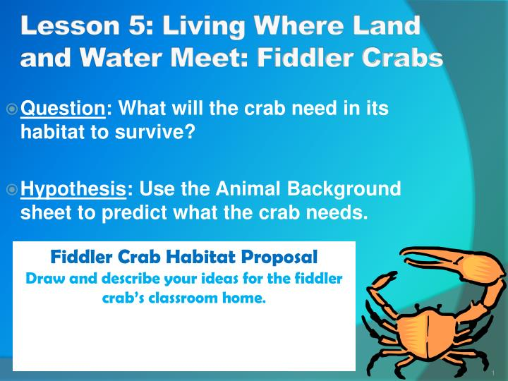 Lesson 5 living where land and water meet fiddler crabs
