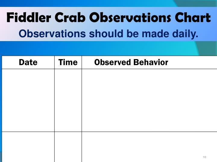 Fiddler Crab Observations Chart