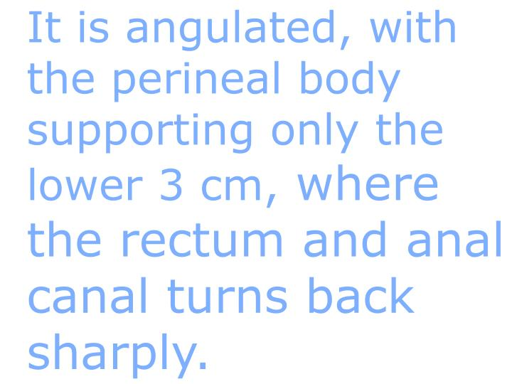 It is angulated, with the perineal body supporting only the lower 3 cm,