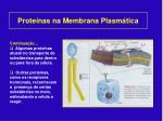 prote nas na membrana plasm tica